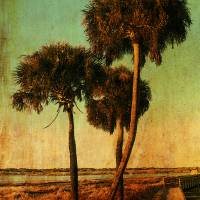 Myakka Palms Art Prints & Posters by Adam Varga