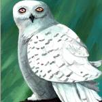 """Snowy Owl"" by Smoocherpoo"