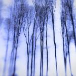 """Blue Forest"" by paulasuterphoto"