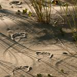 """Beach Footprints"" by AndrewBathurst"