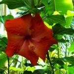 """""""7-25-09 botanic gardens 046"""" by kdw42"""