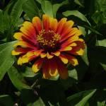 """""""7-25-09 botanic gardens 033"""" by kdw42"""