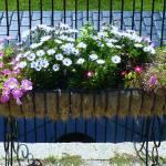 """""""7-25-09 botanic gardens 030"""" by kdw42"""