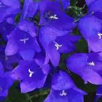"""""""Purple Flowers"""" by artstoreroom"""