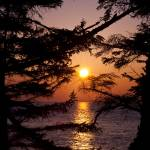 """""""Sunset Through Trees"""" by nilesphotography"""