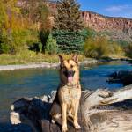 """Cody After A River Swim In Colorado"" by pbk"