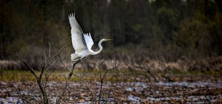Egret Launch