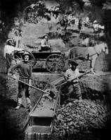Gold Miners working the Sluice Box, 1849