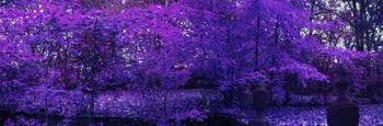 Purple Fall