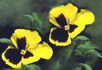 Pansies Art