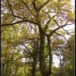 """""""En lo profundo del bosque..."""" by JuanjoL"""