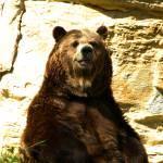 """""""Bear"""" by lwowski"""