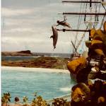 """Dolphin hop"" by lwowski"