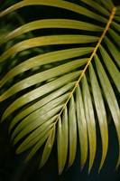 Palm Frawn Leaf 2