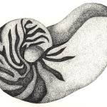 """Pen And Ink Illustration Of A Nautilus Shell"" by drawingwithdots"