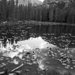 """Nymph Lake"" by davidgilbert"