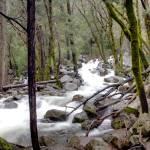 """""""Creek Near Bridal Veil Falls"""" by Eileen"""
