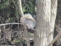 Squirrel in a tree branch