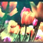 """Imagekind"" by loreee"