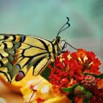 """""""Butterfly Rest stop"""" by Francoesteve"""