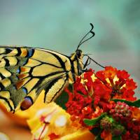 Butterfly Rest stop Art Prints & Posters by Franco Esteve