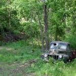 """FORD - Found On Road Dead"" by bettynorthcutt"