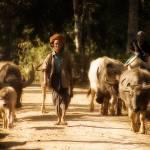 """""""cattle drovers"""" by SabineSteinmueller"""