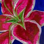 """Stargazer Lily"" by CherylNicole"