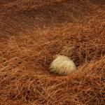 """""""Nest Egg"""" by DanielAnderson"""