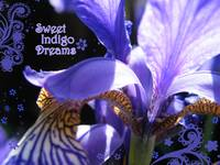 Sweet Indigo Dreams