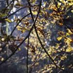 """trees"" by loreee"
