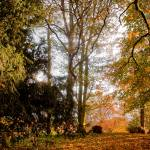 """Autumn scene in Langton (1 of 1)"" by tolkien"