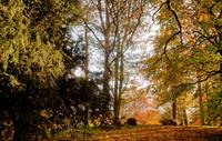 Autumn scene in Langton (1 of 1)