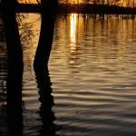 """Lake Silhouettes"" by julieandel"