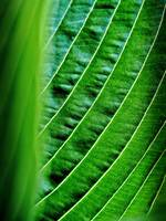 Hosta Abstract