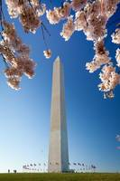 Washington Monument Springtime