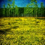 """yellow carpet"" by phototarget"