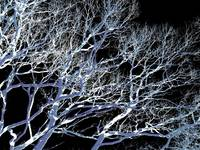 branch viens blue midnight.jpg