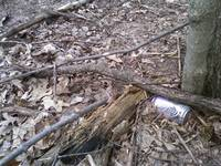 coke in the woods