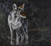 Midnight Coyote