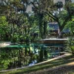 """Juniper springs 4-2011  Juniper Springs (11 of 80)"" by andreaspiveyburton"