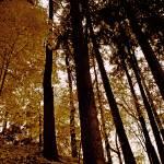 """Tree Light"" by hess"