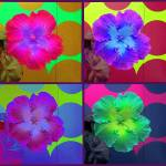 """Flower Montage Series 1"" by JenniferLaskerWhite"