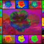 """Flower Montage Series 4"" by JenniferLaskerWhite"