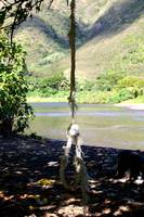 Tattered Rope Swing
