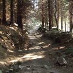 """Dublin Forest Trail"" by shantelleartgallery"