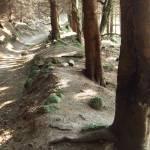 """""""Dublin Forest Trail II"""" by shantelleartgallery"""