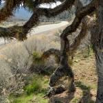 """Joshua Tree Road"" by Colene11"