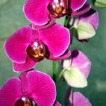"""Orchid"" by photographybysharonwoerth"