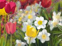 Tulips and Dafodils